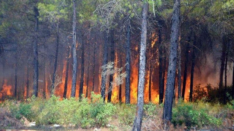 Muğla Köyceğiz Orman Yangını